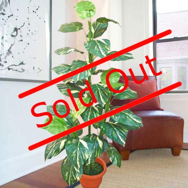 money plant tree. Artificial Money plant 5 feet
