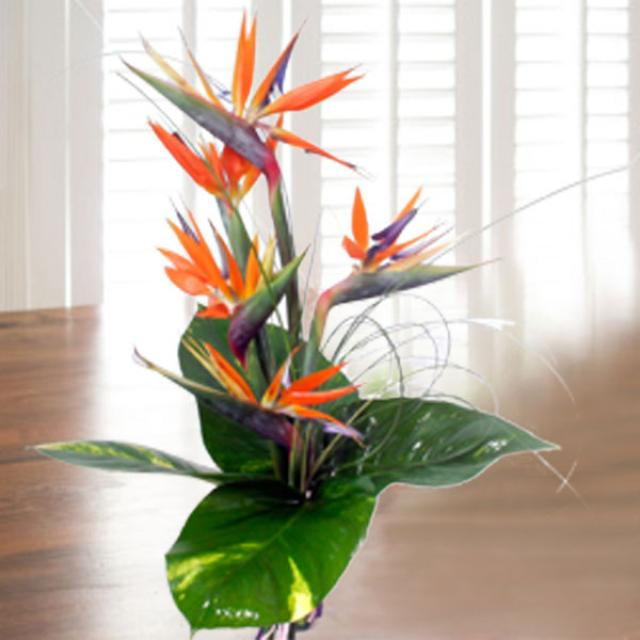 5 Bird of Paradise Handbouquet