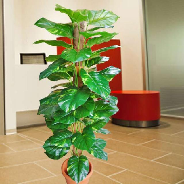 Artificial Money Plant 150cm