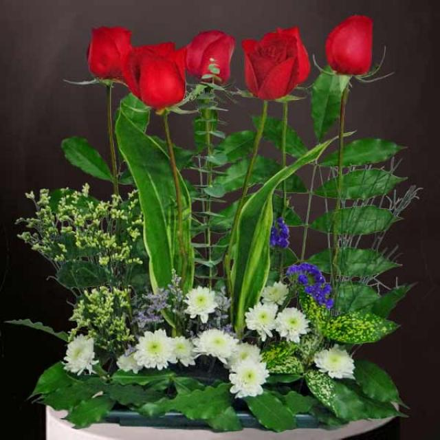 6 Red Roses Small Table Arrangement
