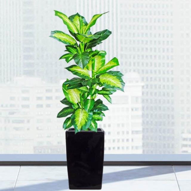 Artificial Dieffenbachia Plant With Fiberglass Planter Total Height 120cm