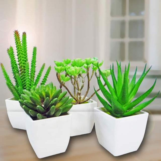 4 Artificial Mixed Mini Cactus Potted Plants
