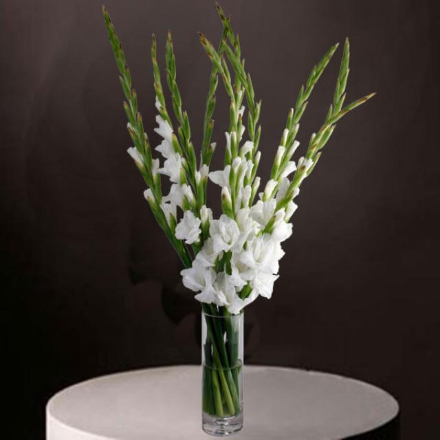 10 White Gladiolus in Glass Vase