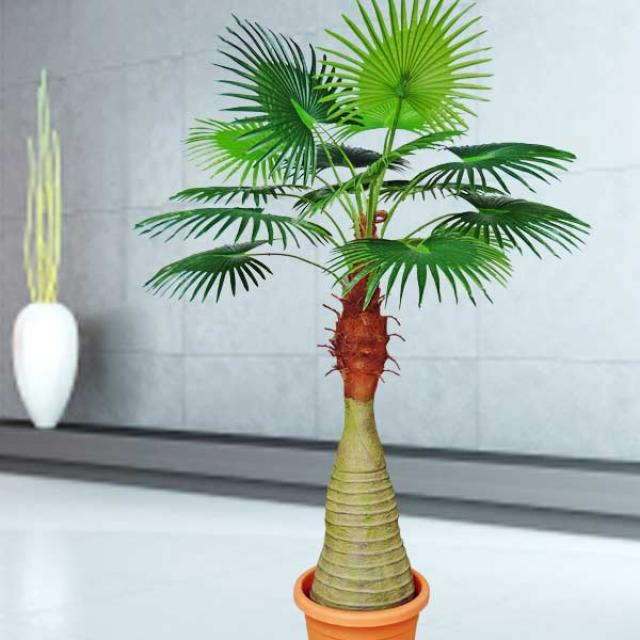 Artificial Palm Tree 180cm Singapore Delivery