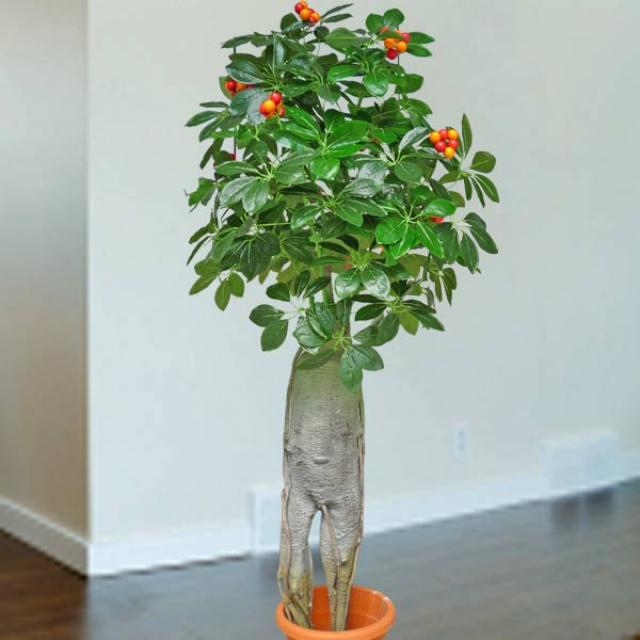 Artificial Ginseng Plant 165cm