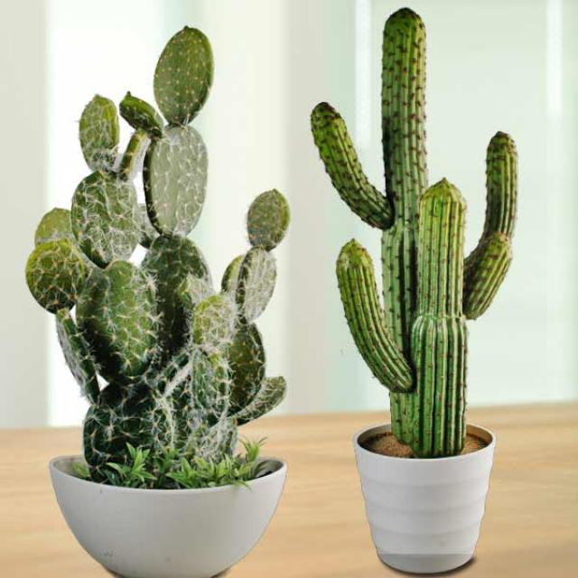 2 Fake Cactus 50cm And 60cm