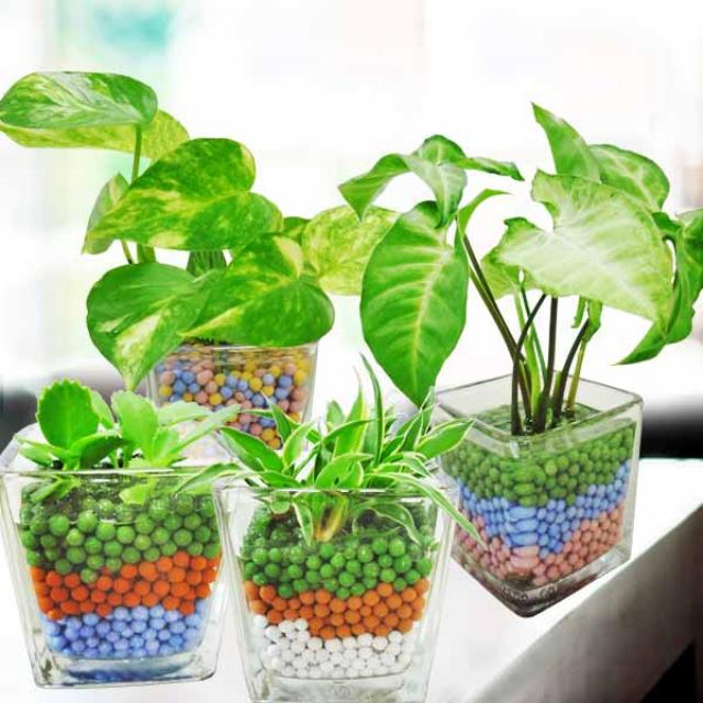 Mini Indoor Hydroponic Plants( 4 Pots )