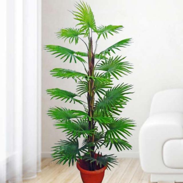 Artificial Lady Finger Palm Tree ( Rhapis palms ) 160cm Height