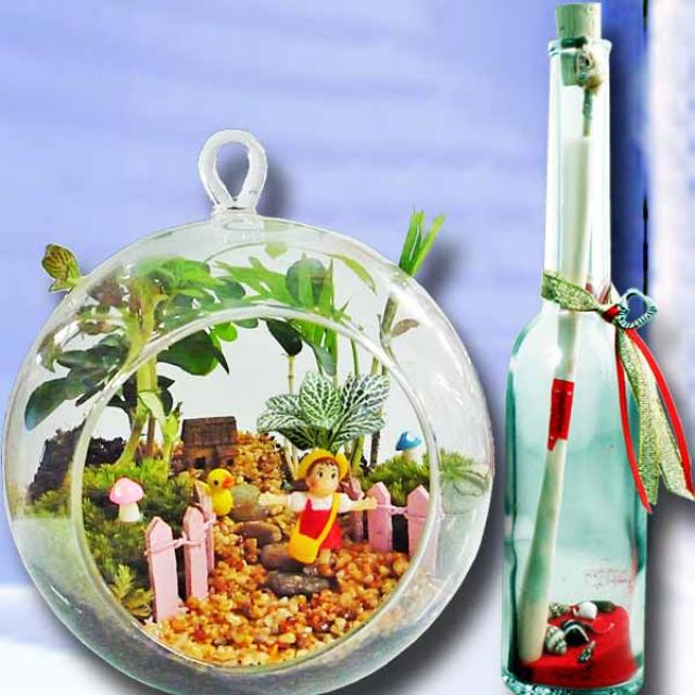 Message in a Bottle & Terrarium in Glass Vase 16cm Height