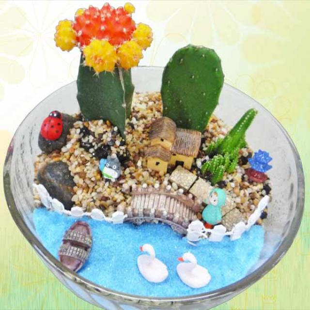 Mini Cactus Fairy Pond Garden
