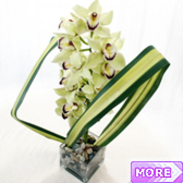 Cut Orchid Arrangement