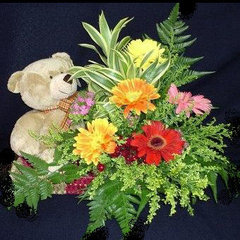 Bear with Gerbera Basket arrangement.