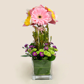 Mixed Color Gerbera in Glass Vase