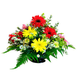 Mixed Gerbera All round arrangement.