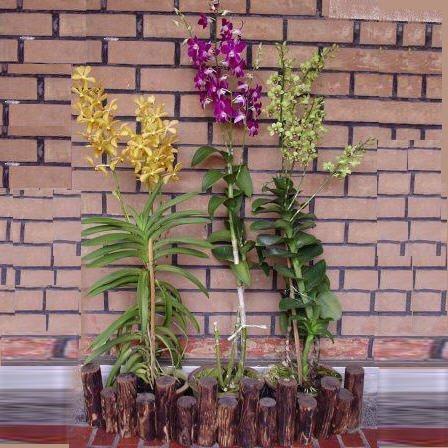 3 Orchids with wooden fencing 3 feets long