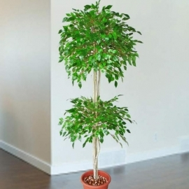 Artificial Ficus Tree 175cm Height, Plastic Pot