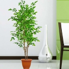 Artificial Ficus Tree 168cm Height