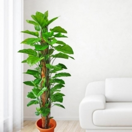 Artificial Money Plant 175cm Height