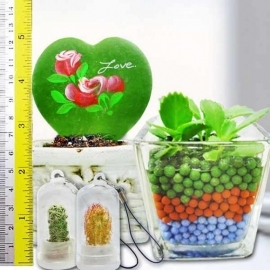 Heart Shape HOYA Plant in Pot & Mini Indoor Hydroponic Plant.